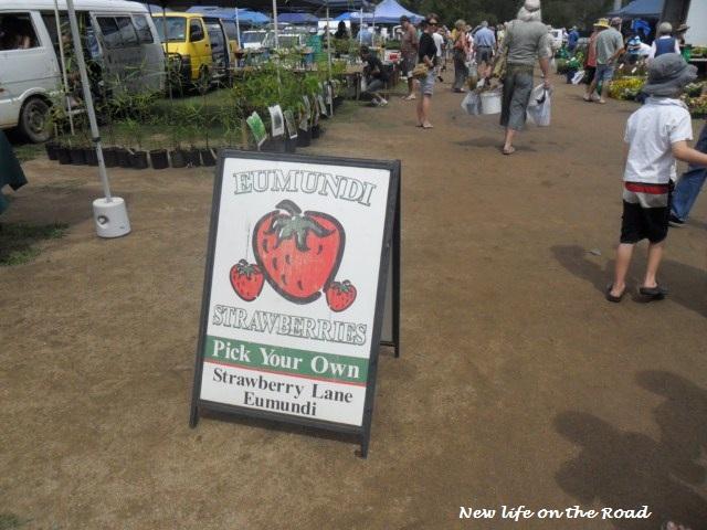 Strawberries at Yandina Markets