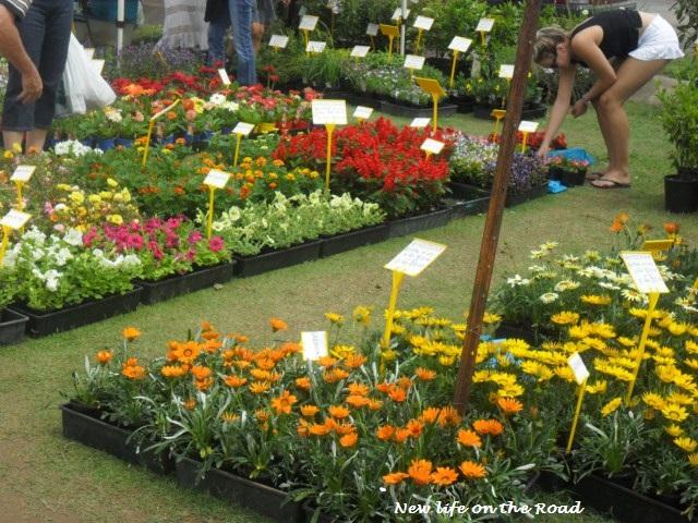 Flowers Yandina Markets
