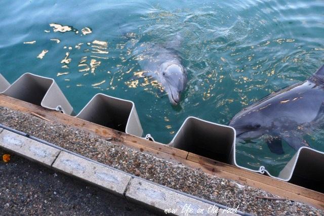 Seaworld - Dolphins