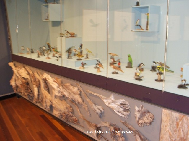 Birdwatching Display