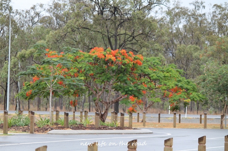 Trees in Queensland