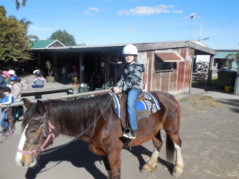 Horse riding at Darkes Forsest Riding Ranch