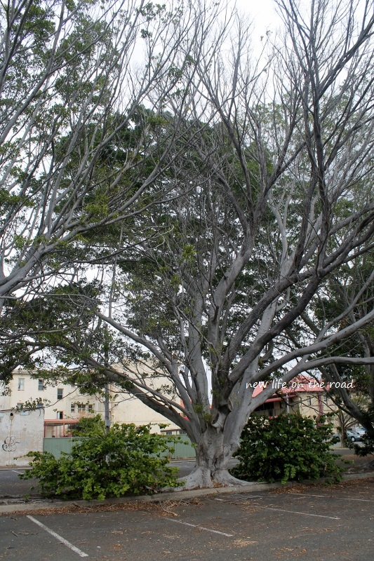 Trees in Port Kembla