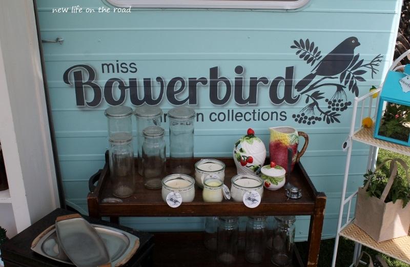Miss Bowerbird