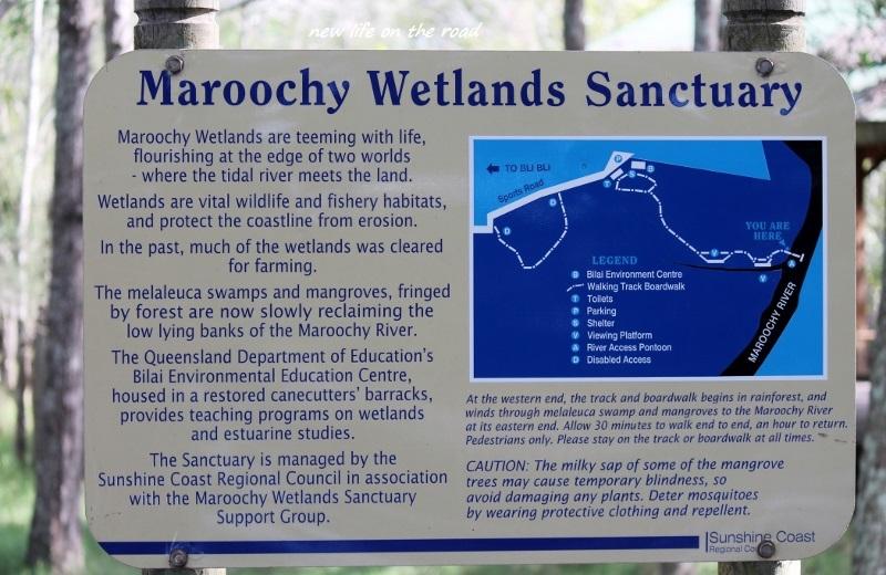 Regrowing the wetlands