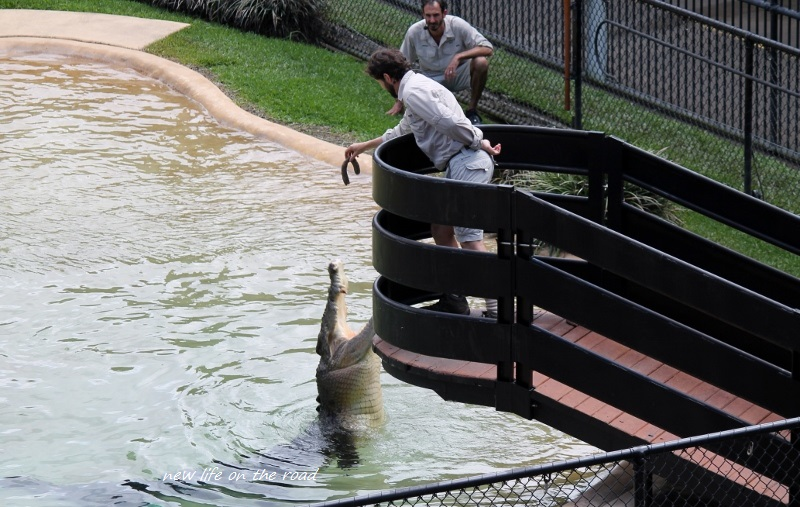 Watching the Crocs feeding