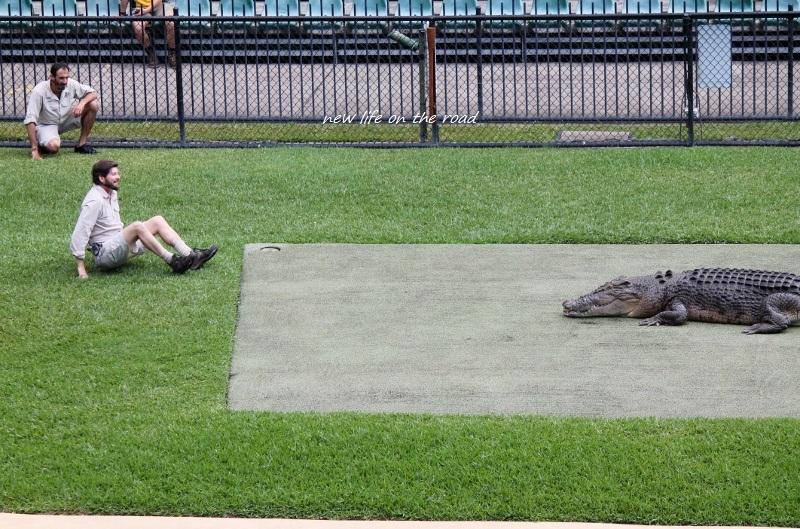 Crocodiles at Australia Zoo
