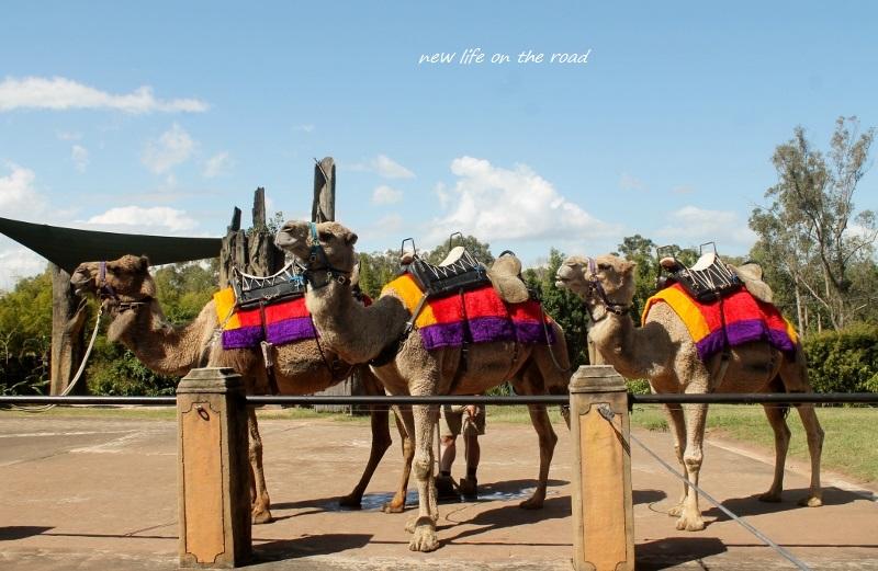 Camel Rides at the Zoo