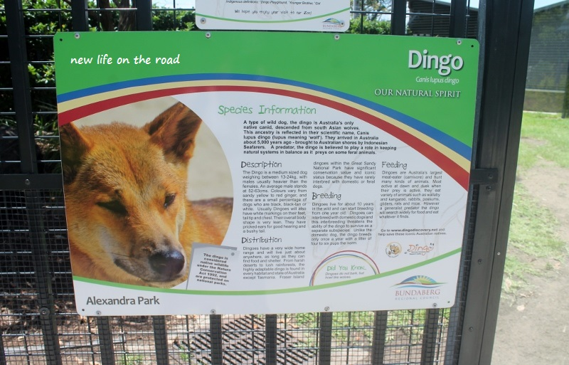 Dingo Information at the Zoo