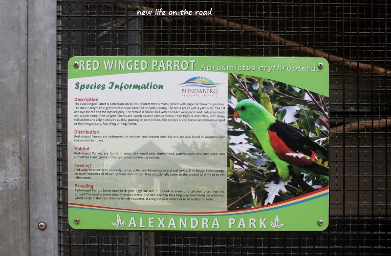 Parrot Information