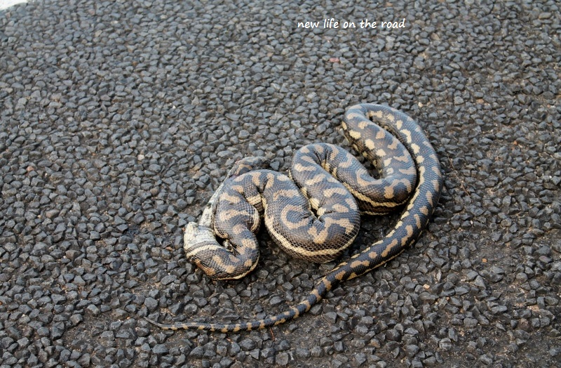 Snake on the side of the road
