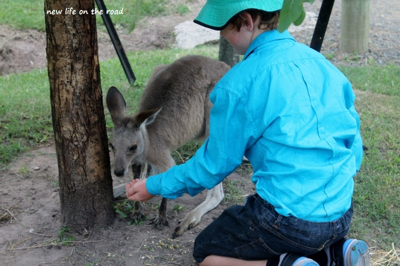 Kyle feeding the marsupials