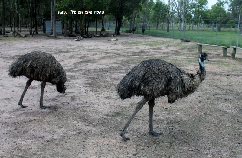 Emus really scare me
