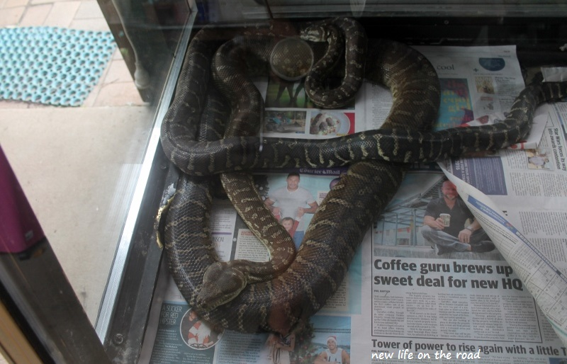 Snakes at the Fraser Coast Wildlife Sanctuary
