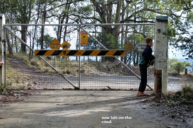 Dingo Gate at Barrington Tops