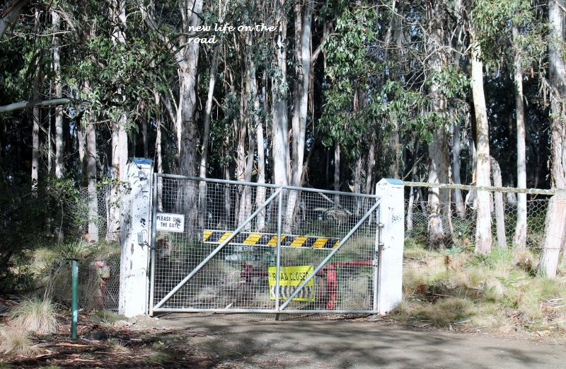 DINGO GATE AT BARRINTON TOPS